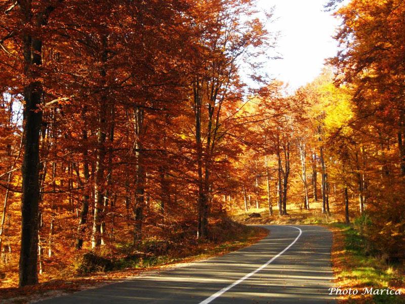 Jesen na Goču