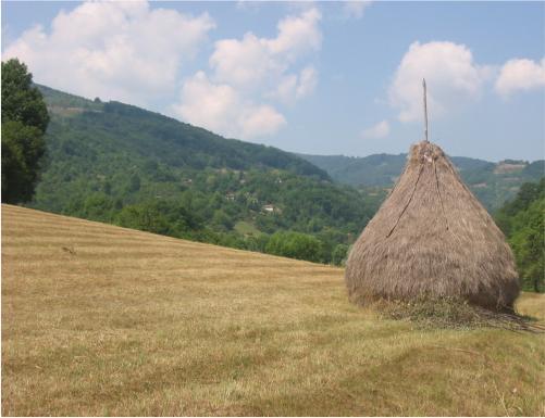 Pašnjaci u Mitrovom Polju